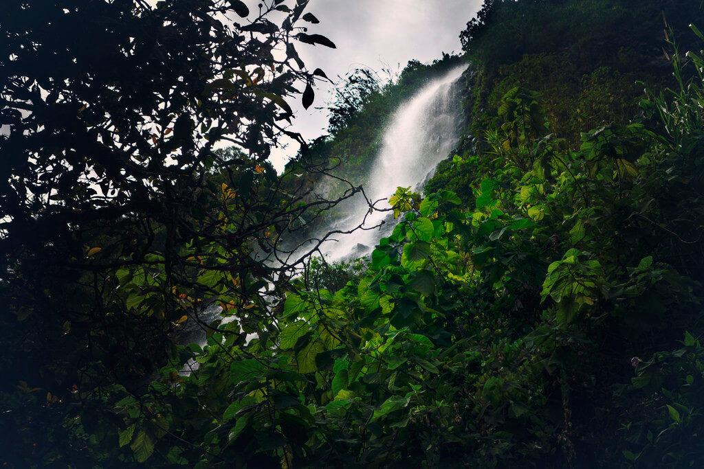 Huaira selva o