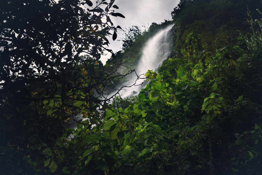 Huaira selva 4